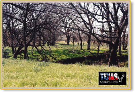Texas Quality Hunts Landscape 1