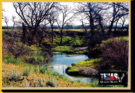 Texas Quality Hunts Landscape 3