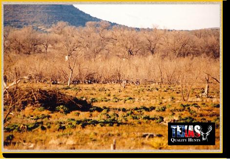 Texas Quality Hunts Landscape 4